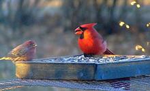 Birdsatfeeder_1