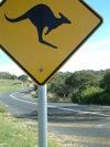 Kangaroosign