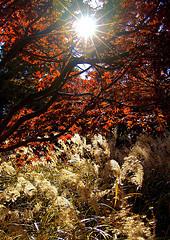 Sunshinetrees_1